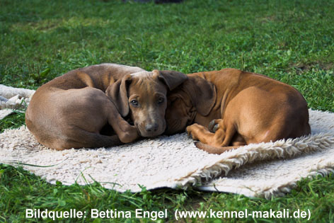 Research: Coat color dilution in various breeds - Institute
